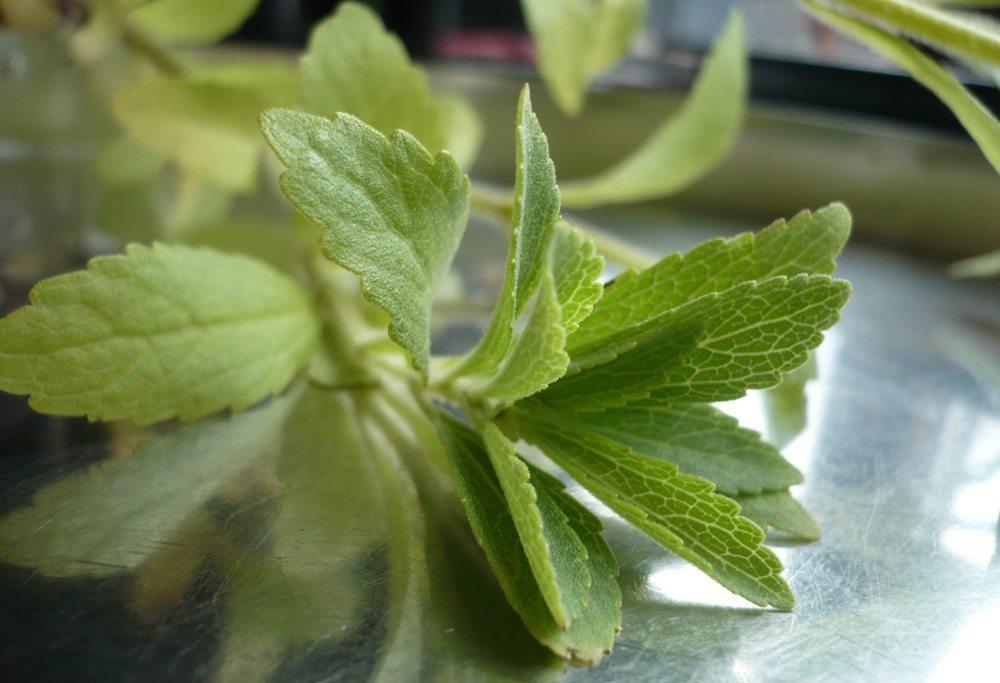Stevia – Süßen auf die andere Art (Bild: sigrid rossmann  / pixelio.de)