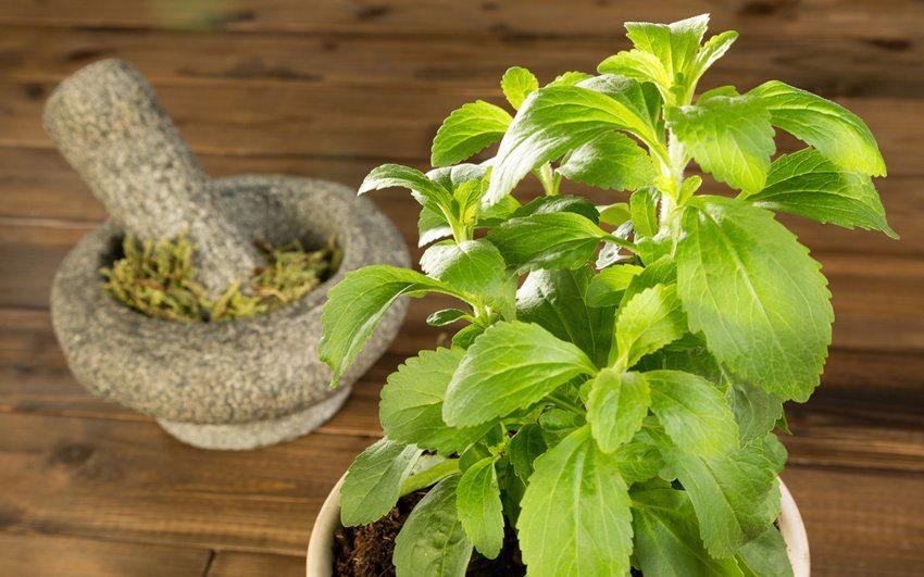 Setzen Sie idealerweise auf ganz natürliches Stevia. (Bild: Anneka / Shutterstock.com)