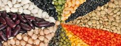 Pflanzliche Proteine-Madlen-Shutterstock.com