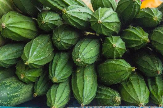 Die Schwammkürbisse sind ursprünglich in den Tropen beheimatet. (Bild: Lempoyang Photo Art - shutterstock.com)