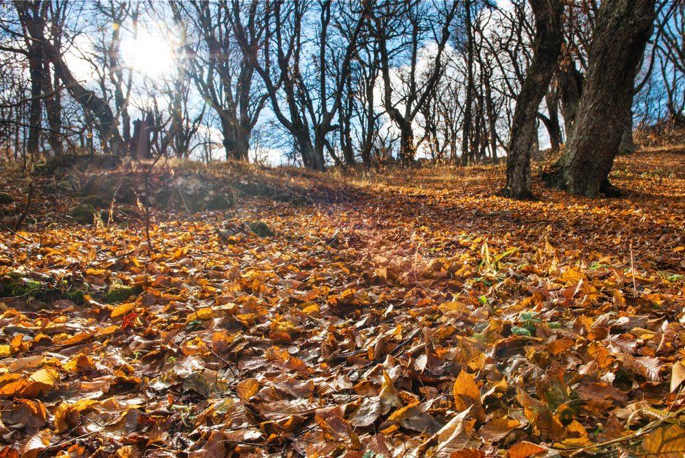 Der Herbst ist die schönste Zeit zum Wandern, ein in der Natur verbrachter Tag macht glücklich und zufrieden. (Bild: Pavel Vakhrushev / Shutterstock.com)