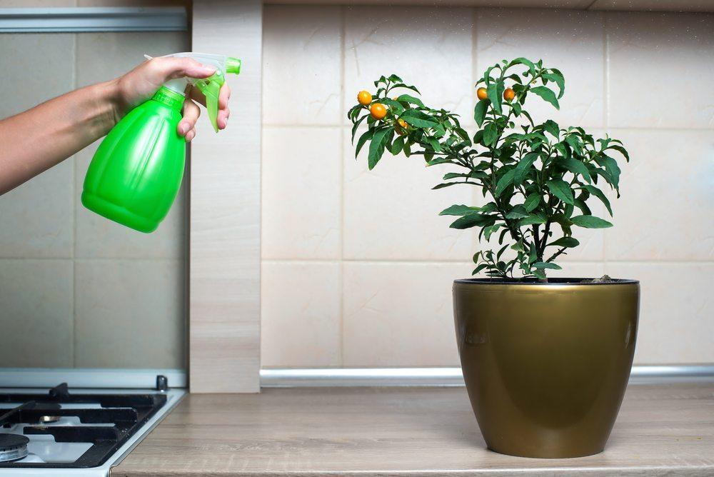 Schädlingsbekämpfung. (Bild: Stas Walenga / Shutterstock.com)