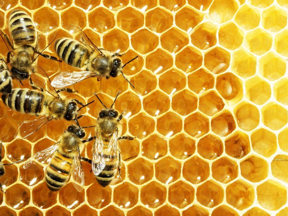 Ein Bienenvolk sammelt 12 bis 15 Kilogramm Nektar im Jahr. (Bild: StudioSmart / Shutterstock.com)