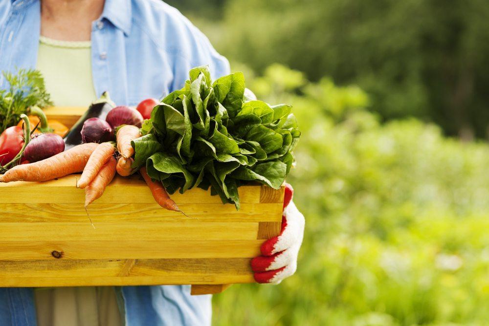 Bio bedeutet meist regionale Produktion in hoher Qualität. (Bild: gpointstudio / Shutterstock.com)