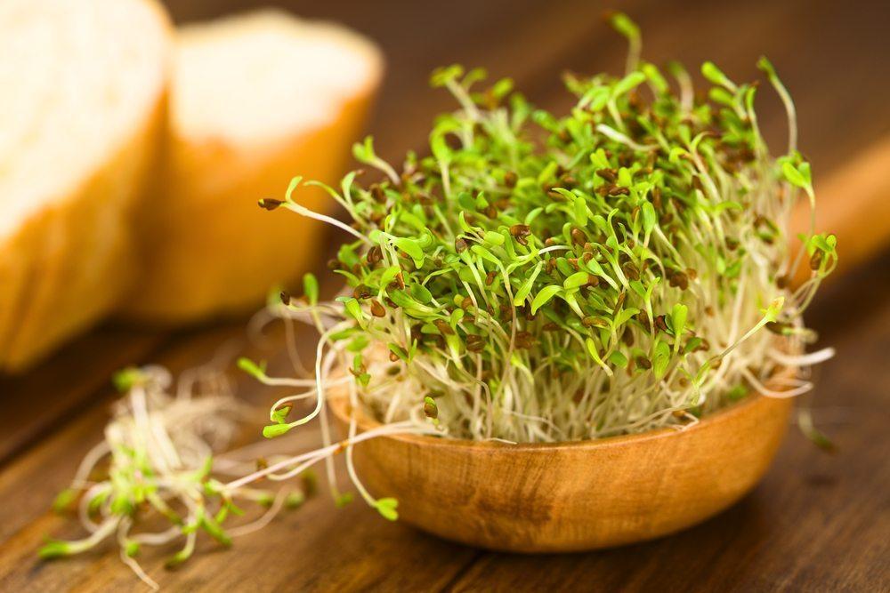 Den Anfang soll aber die beliebte Gartenkresse machen. (Bild: © Ildi Papp - shutterstock.com)
