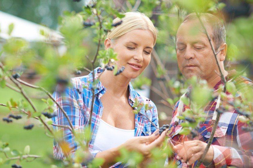 Ein Apfelbeerenstrauch ist zu jeder Jahreszeit ein Blickfang (Bild: © Pressmaster - shutterstock.com)