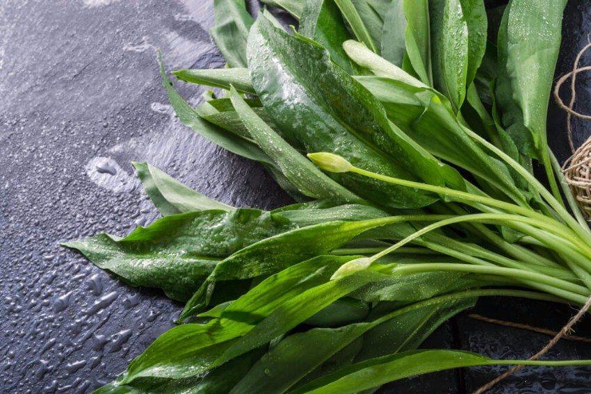 Sie können Blätter und Stängel der Pflanze in der Küche verwenden. (Bild: © Dar1930 - shutterstock.com)