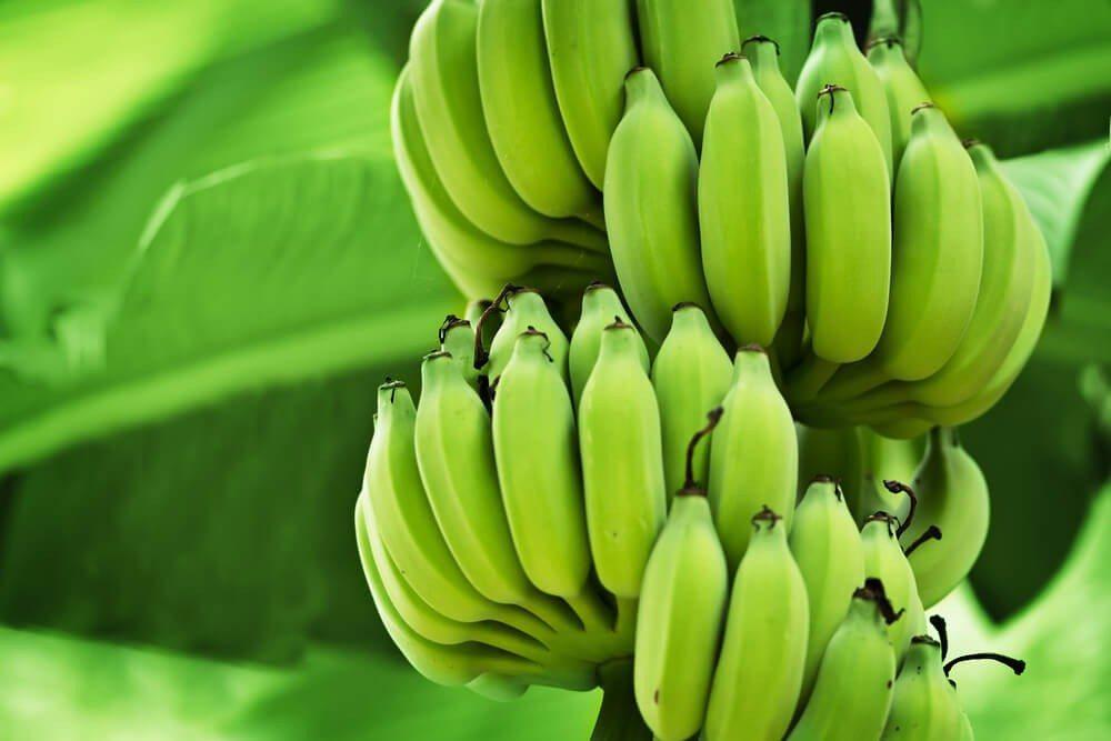 In den Herkunftsländern wird die Banane noch unreif und grün geerntet und kommt so zu uns nach Europa. (Bild: © pzAxe - shutterstock.com)