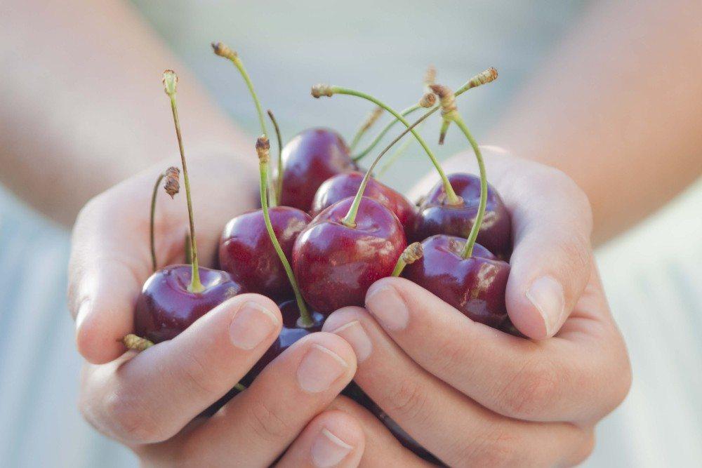 Kaufen Sie die Kirschen am besten direkt bei den Schweizer Bauern. (Bild: © Kanea - fotolia.com)