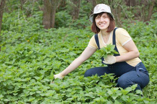 Der Vormittag eignet sich besonders zum Sammeln von Pflanzen. (Bild: Iakov Filimonov / Shutterstock.com)