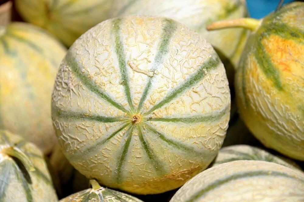 Die Galia-Melone (Bild: © aro49 - fotolia.com)