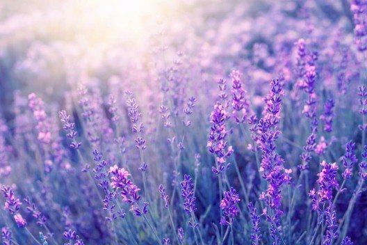 Bei Spa-Behandlungen wird Lavendel gerne eingesetzt, um Stress und Anspannungen zu lindern. (Bild: © Kotkoa - shutterstock.com)