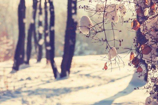 So malerisch der Winter auch sein kann – für unsere Haut ist er eine Belastung. (Bild: © Galyna Andrushko - shutterstock.com)