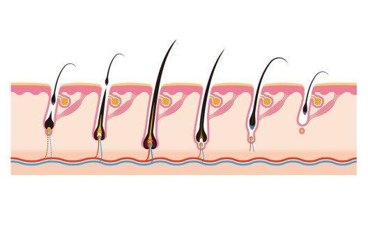Auch das Haar hat einen Lebenszyklus. (Bild: alphabe – Shutterstock.com)