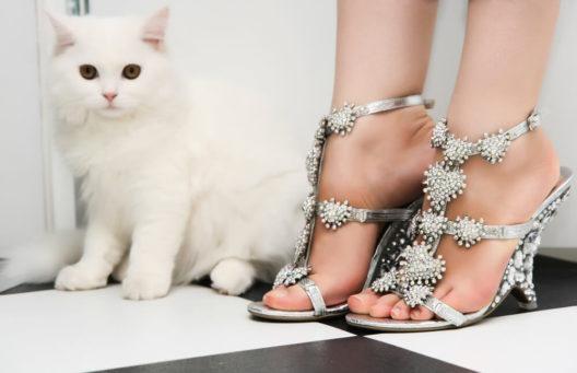 Kitten Heels wieder im Kommen (Bild: SaNa - shutterstock.com)